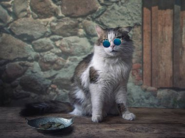 Cat in sunglasses asks alms at an old wall
