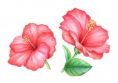 Gyűjteménye akvarell kézzel rajzolt piros hibiszkusz virágok a levelek whitebackground elszigetelt.
