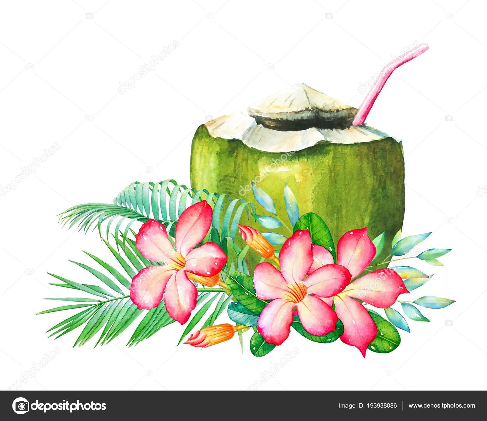 Acuarela Dibujo Las Flores Tropicales Hojas Coctel Coco Aislado