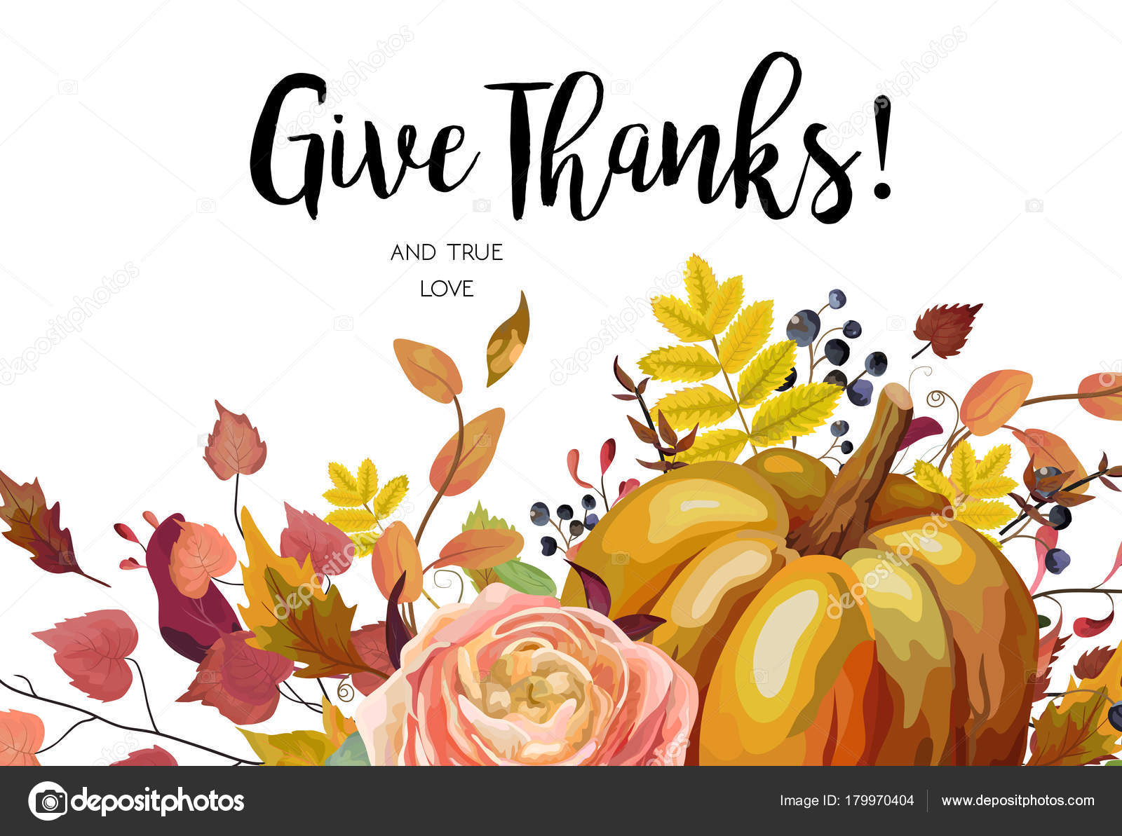 Happy Thanksgiving Vector Floral Watercolor Style Hand Drawn Greeting Card Design Autumn Season Pumpkin Pink Ranunculus