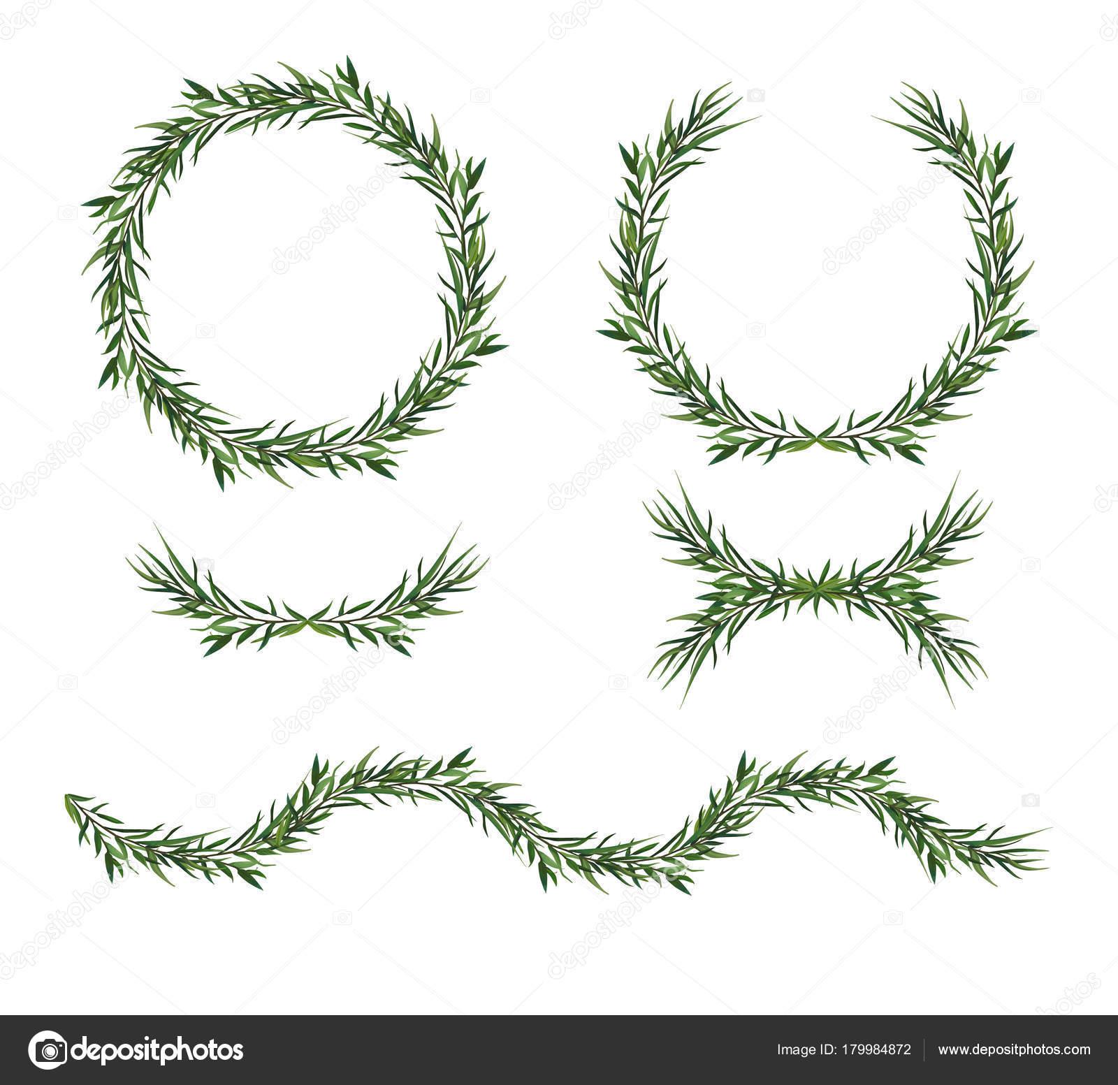 Vektor, dekorative große Elementsatz. Grüne Eukalyptusblätter Runde ...