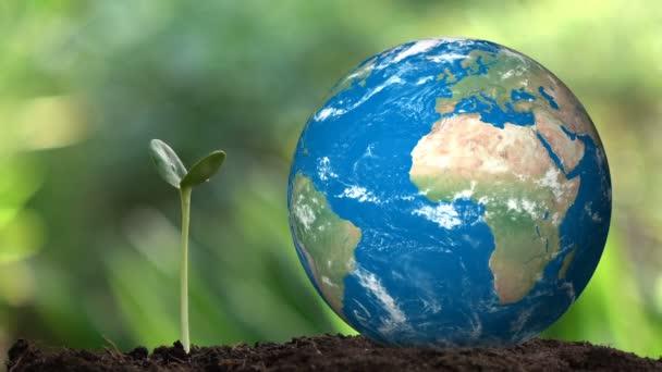 Ültetés egy fa és a föld forgás hologram menteni a földet, és a természetes, tiszta ökológia a természetes.