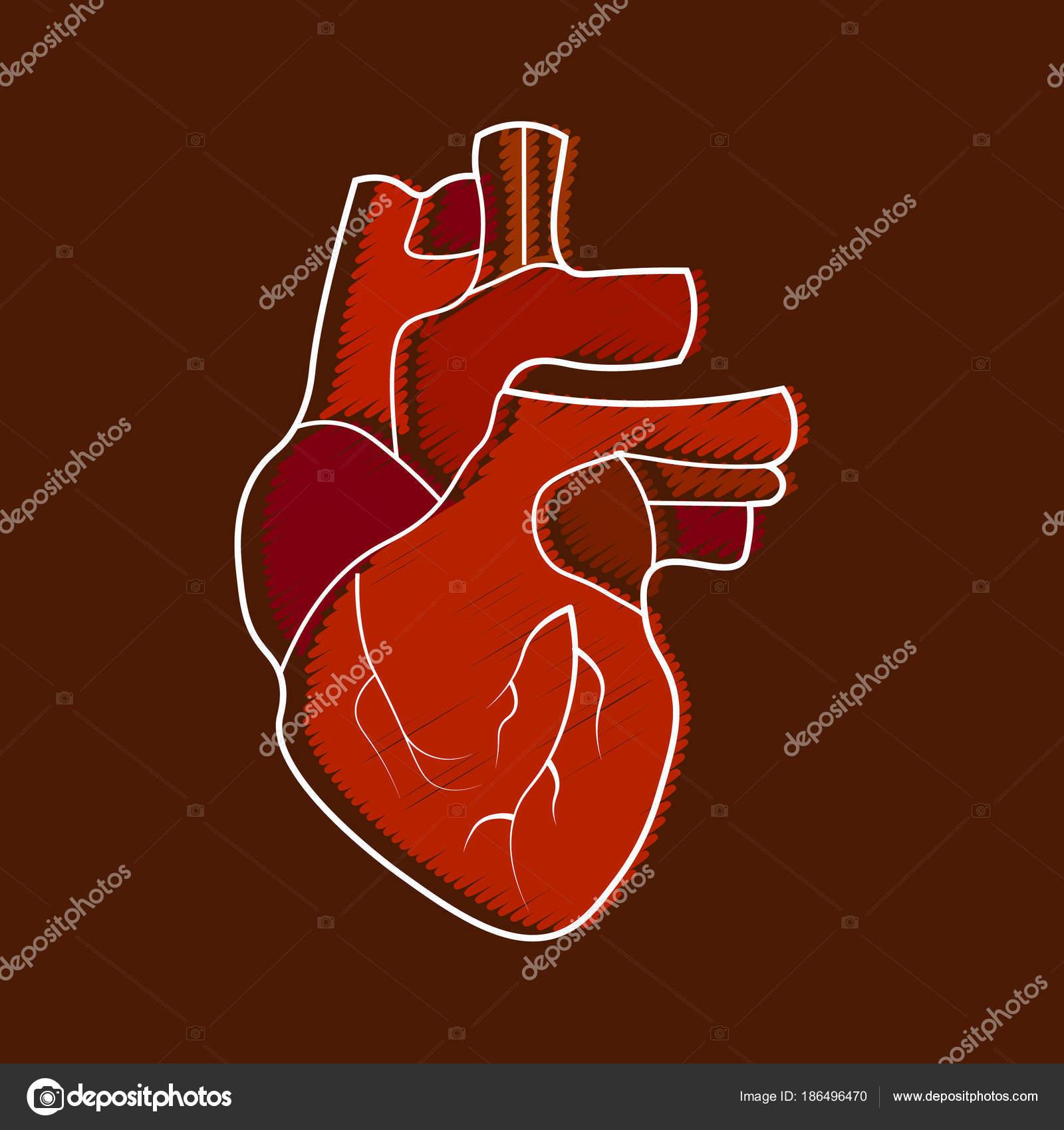 Stilisierte menschliche Herz-Anatomie-Symbol. Moderne flach Cartoon ...