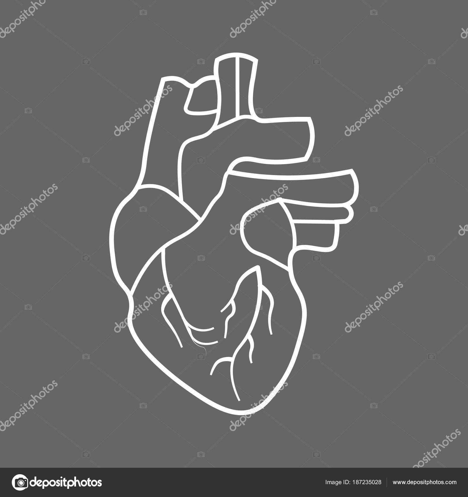 Icono de línea estilizada corazón humano Anatomía — Vector de stock ...