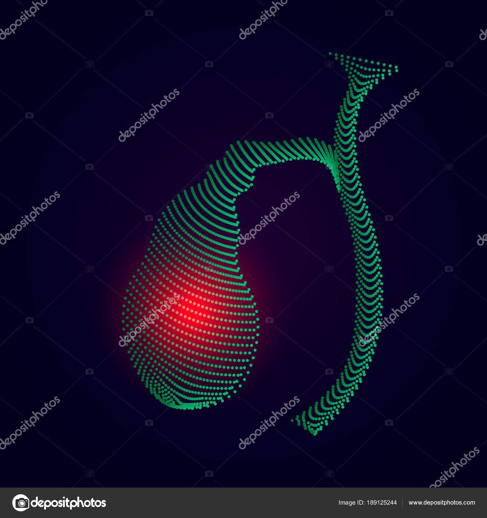 Ilustración de vesícula biliar humano con centro del dolor. órgano ...