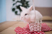 Fotografie cute white easter rabbit sitting in basket
