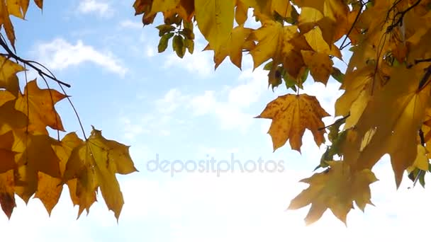 Sunny autumn sky and maple leaves