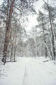 cesta a stromy v zasněžených sadech v zimě
