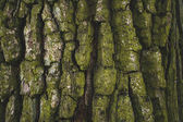 cracked rough green tree bark background