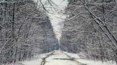 road and trees in snowy forest in winter during sunset