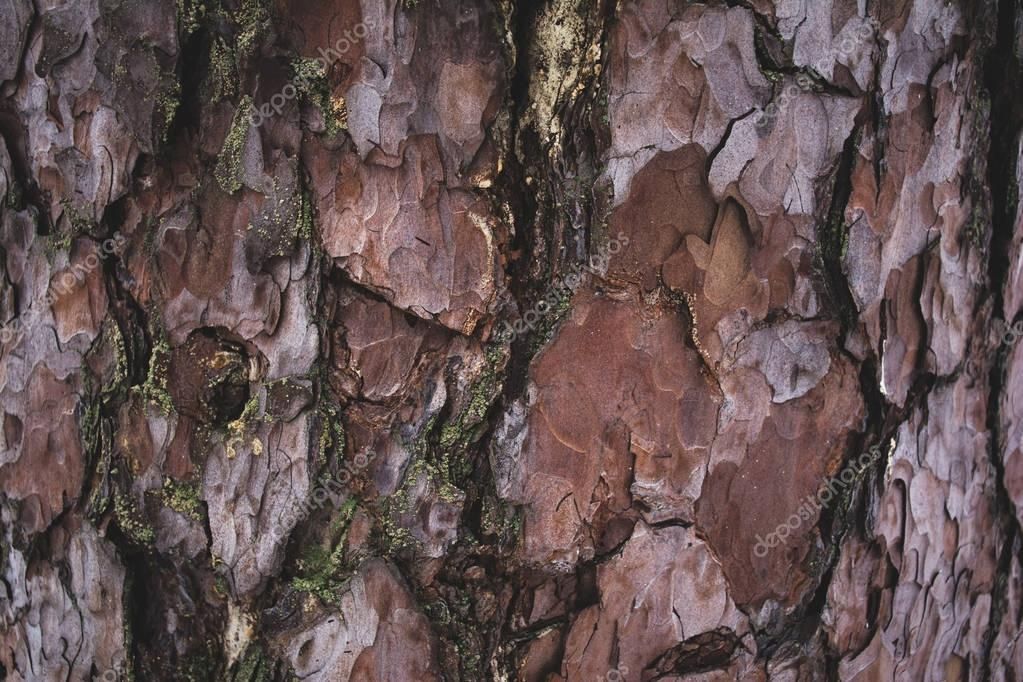 cracked rough brown and purple tree bark background