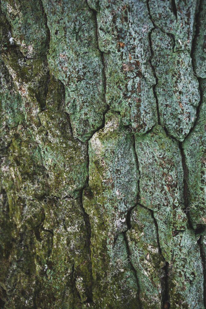 cracked rough green tree bark background