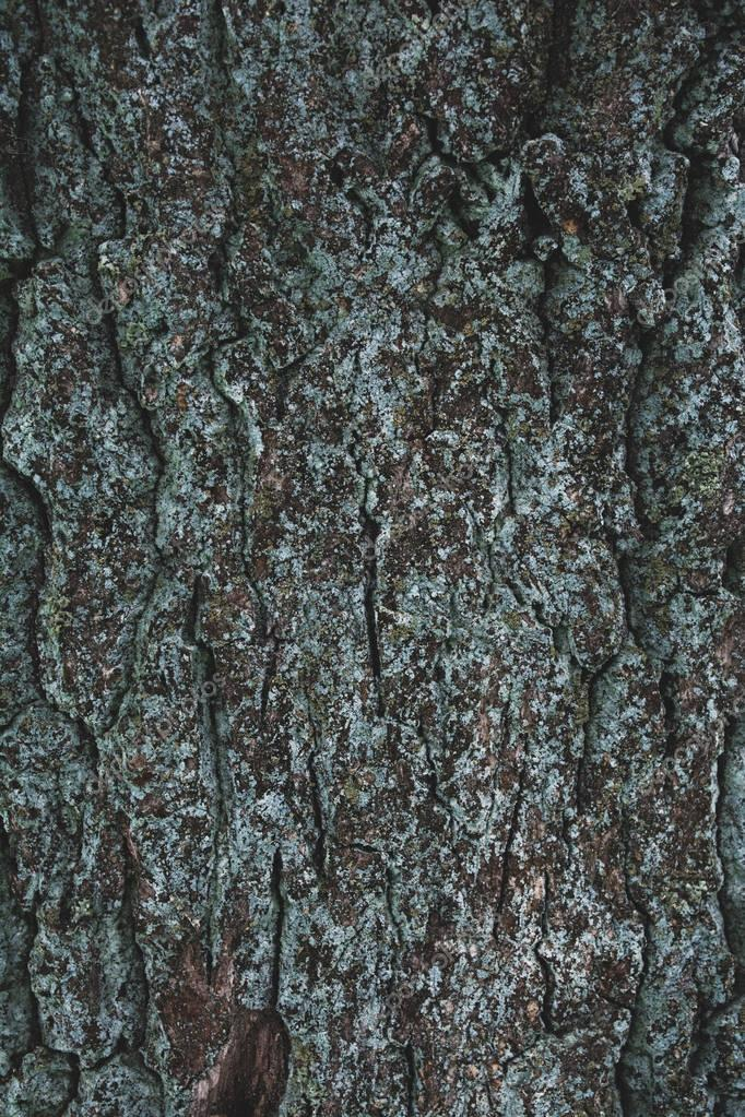 cracked rough brown and turquoise tree bark background