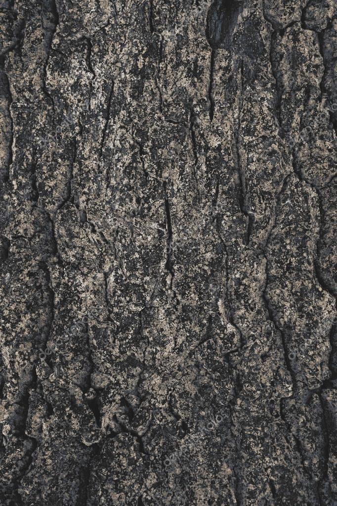 cracked rough tree bark background