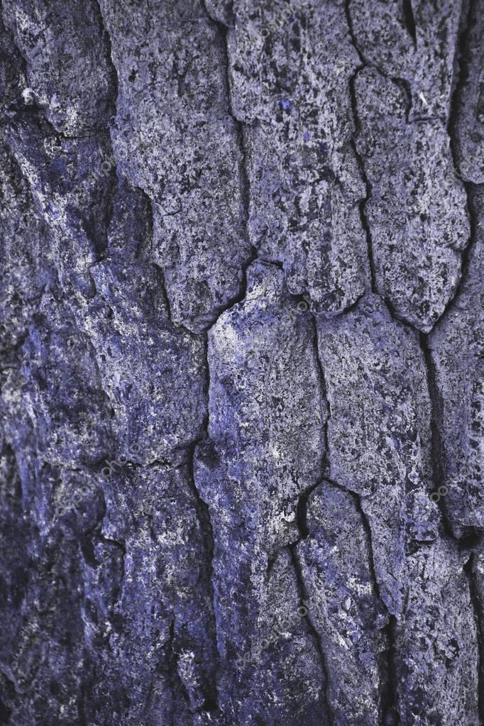 cracked rough purple tree bark background