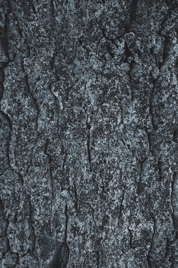 cracked rough gray tree bark background