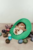 domestic bunny lying in green hat with easter eggs on surface
