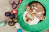 Fotografie high angle view of domestic rabbit in green hat with easter eggs on surface