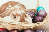 funny domestic rabbit lying in straw basket with painted easter eggs
