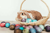 Fotografie domestic rabbit lying in straw basket with painted easter eggs