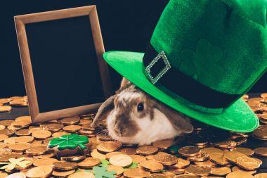 domestic rabbit sitting on golden coins under green hat, st patricks day concept
