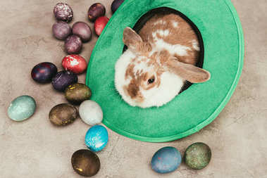 high angle view of domestic rabbit lying in green hat with easter eggs on surface