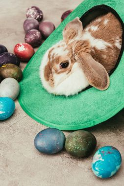 domestic rabbit lying in green hat with easter eggs on surface
