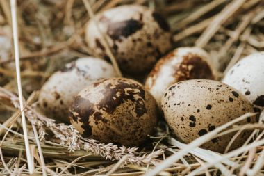 quail eggs laying on straw close to each other