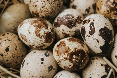 quail eggs laying on straw, full frame shot