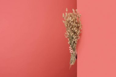 woman sticking out Lagurus bouquet behind wall on red
