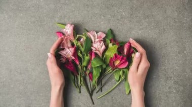 stop motion footage with female hands and beautiful peruvian lilies on grey concrete tabletop