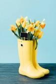 zblízka pohled žluté tulipány a květin Narcis s prázdnou tabuli v holínkách na modré