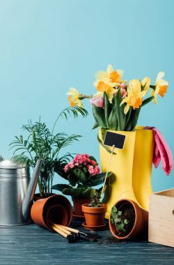 Close up view of arranged rubber boots with flowers, flowerpots, gardening tools and watering can on wooden tabletop on blue stock vector