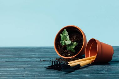 close up view of gardening equipment and flowerpots on wooden tabletop on blue