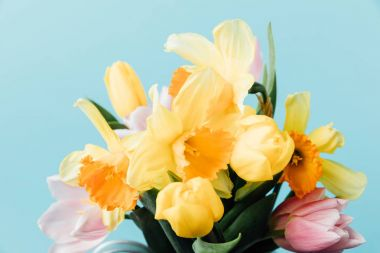close up view of beautiful tulips and daffodils isolated on blue