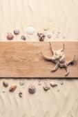 Fotografie Velké mušle na dřevěném molu na písečné pláži