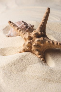 Summer theme template with starfish and shell on sandy beach