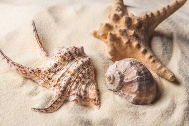 Sea starfish and shells on light sand