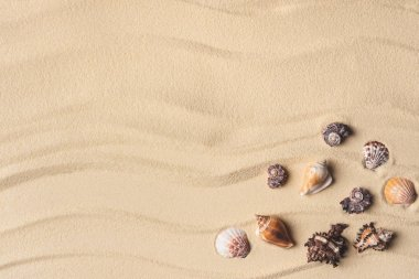 Beautiful seashells corner on light sand
