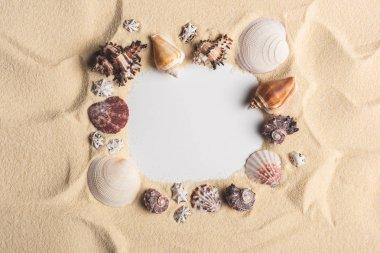 Frame of various seashells on light sand