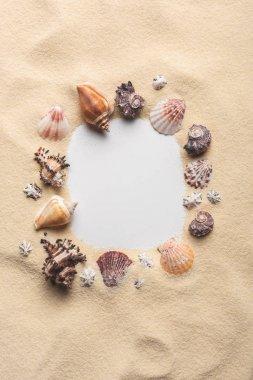 Frame of various seashells on sandy beach