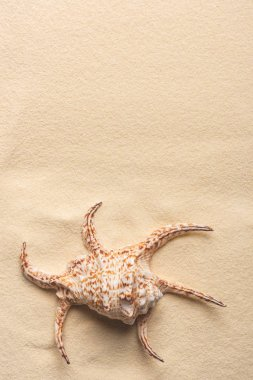 Large beautiful seashell on sandy beach