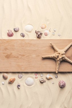 Starfish on wooden pier on sandy beach with seashells