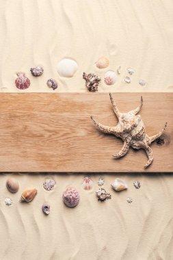 Large seashell on wooden pier on sandy beach stock vector