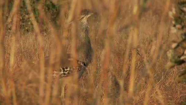 pták v vysoká tráva