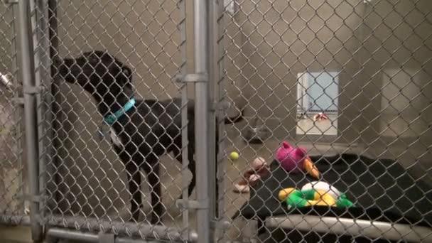 roztomilé černé štěně vrtí ocasem uvnitř klece