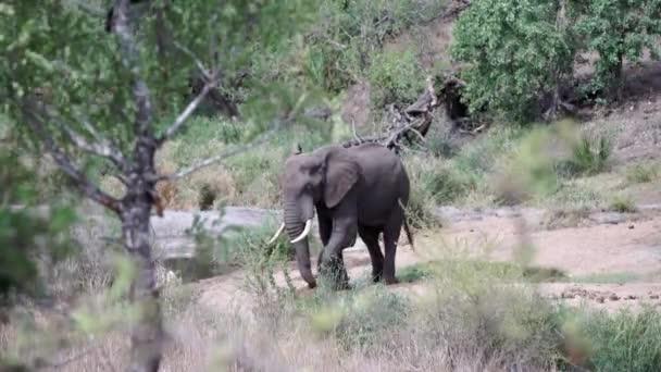 elefánt keres élelmiszer