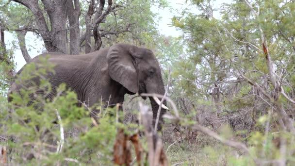 elefánt állt a bokor