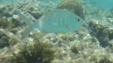underwater view of fish swimming in coral reef