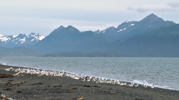 flock of gulls flying from beach with mountain